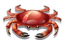 Crab_image